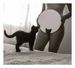 Котето любовно